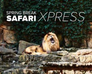 Trinity Metro Safari Xpress