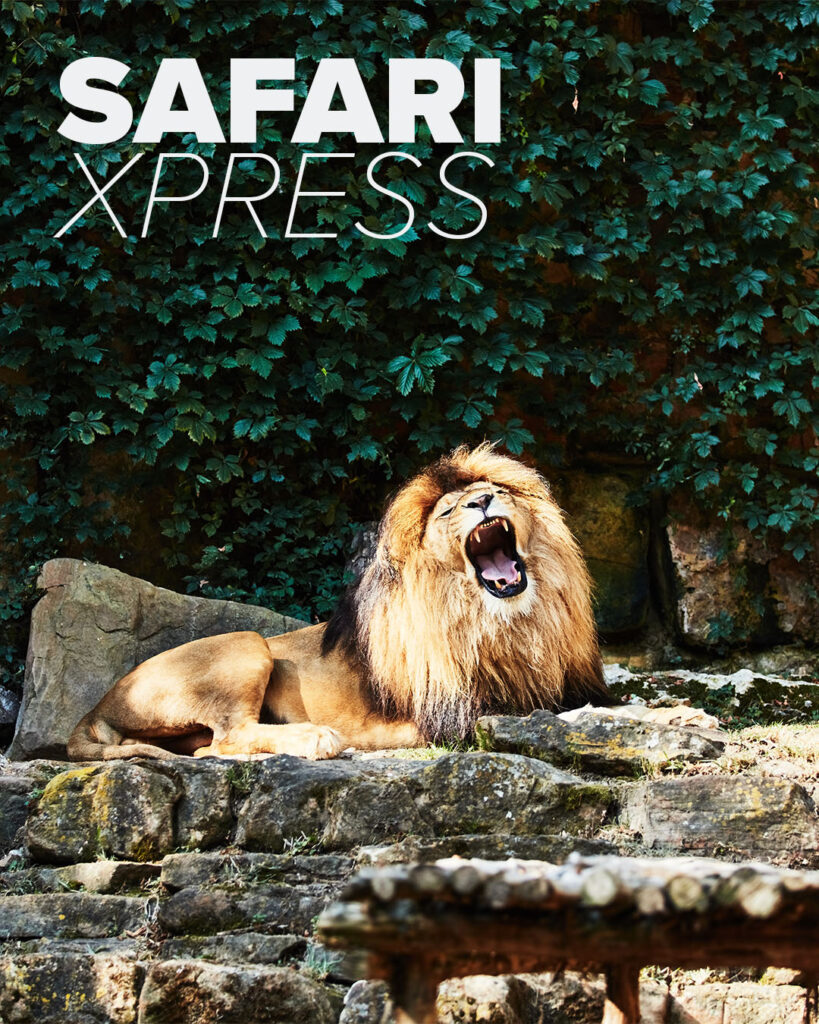 Safari Xpress. Trinity Metro Blog.