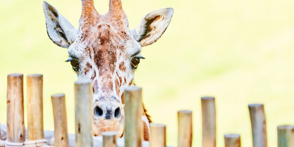 Trinity Metro Blog Mid July Newsletter Zip to the Zoo on ZIPZONE