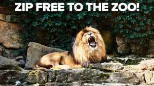 Loin at the Zoo